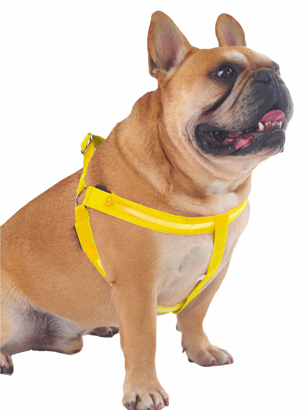 Affordable online dog muzzles and harnesses glow LED