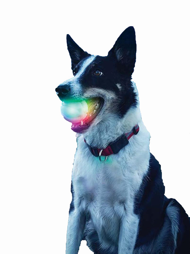 Glow in the dark LED Dog Ball toy