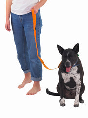 High visibility glowing LED dog lead for night walks