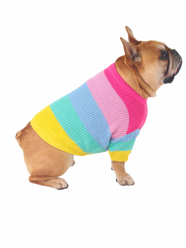 Cool knitted rainbow sweater for dogs
