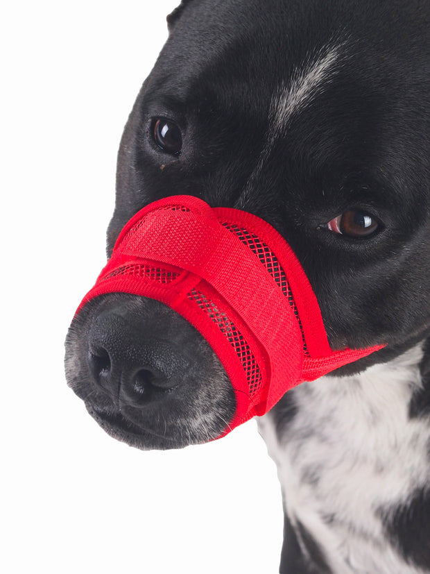 Anti barking dog muzzle
