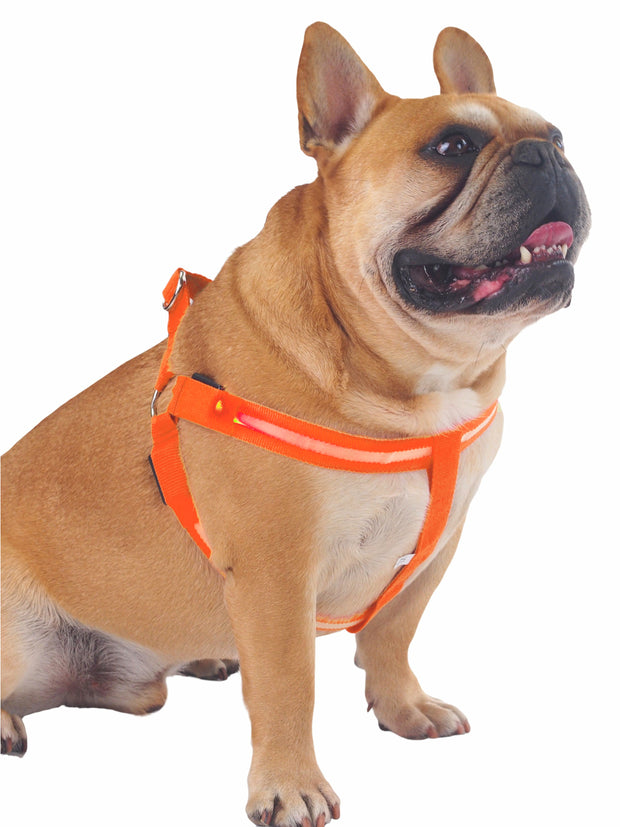 Glow in the dark LED dog harness