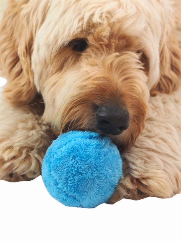 Magic Mop Ball Interactive Dog Toy