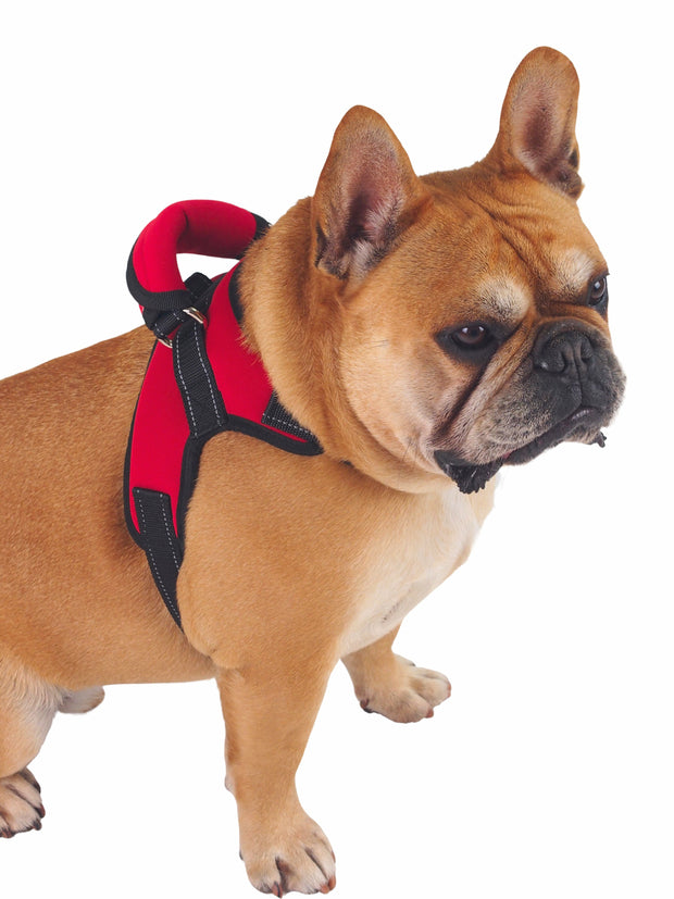 Adjustable Neoprene Dog Harness with handle