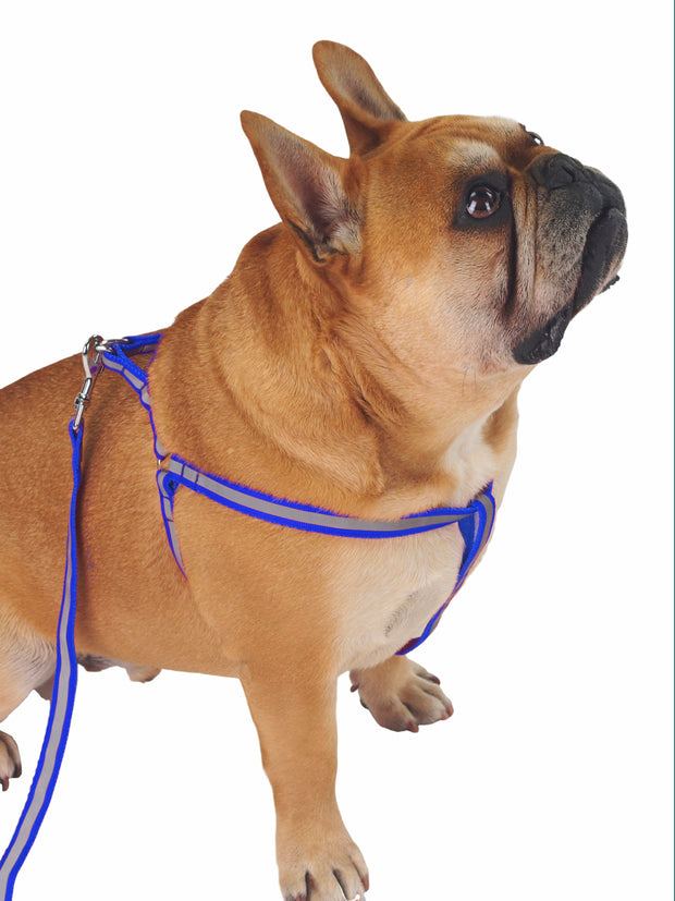 Reflective dog harness for walking dog at night