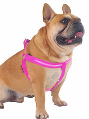 Bright LED light glowing dog harness in pink