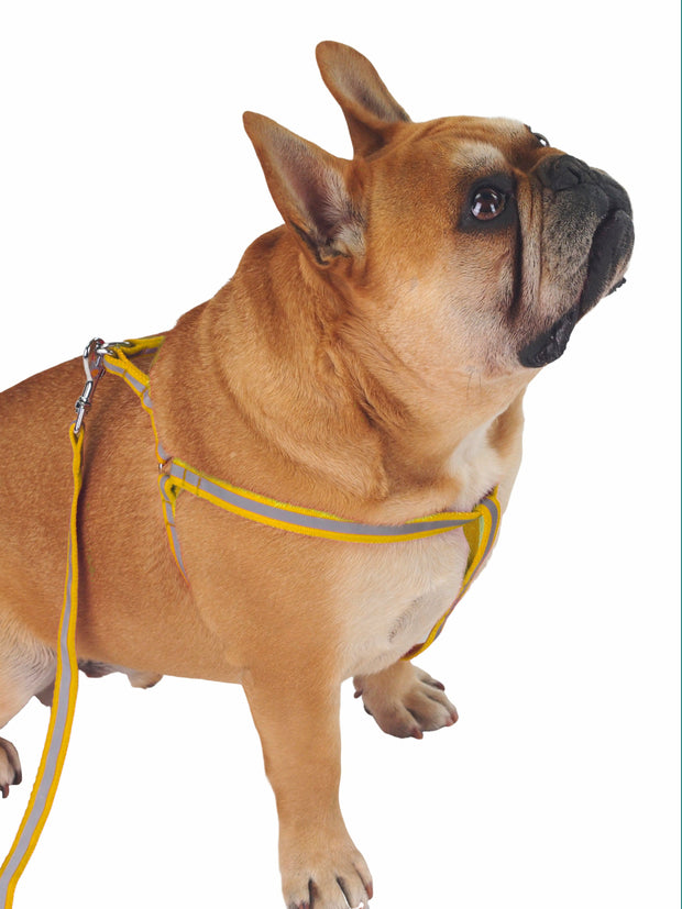 reflective high visibility dog harness and lead set