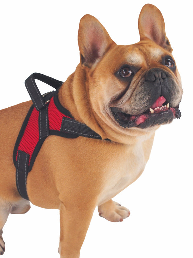 Adjustable Breathable Mesh Dog Harness with grab handle