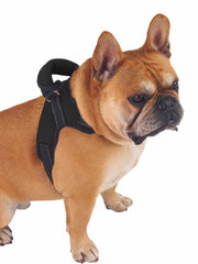 Adjustable Strong Neoprene Dog Harness