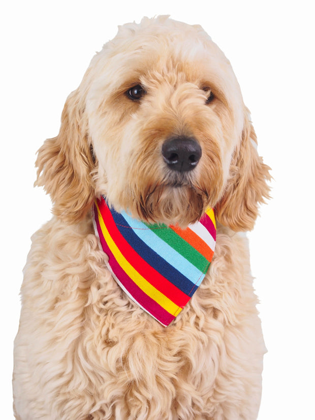 Nylon Clip On Dog Bandanas in rainbow pattern