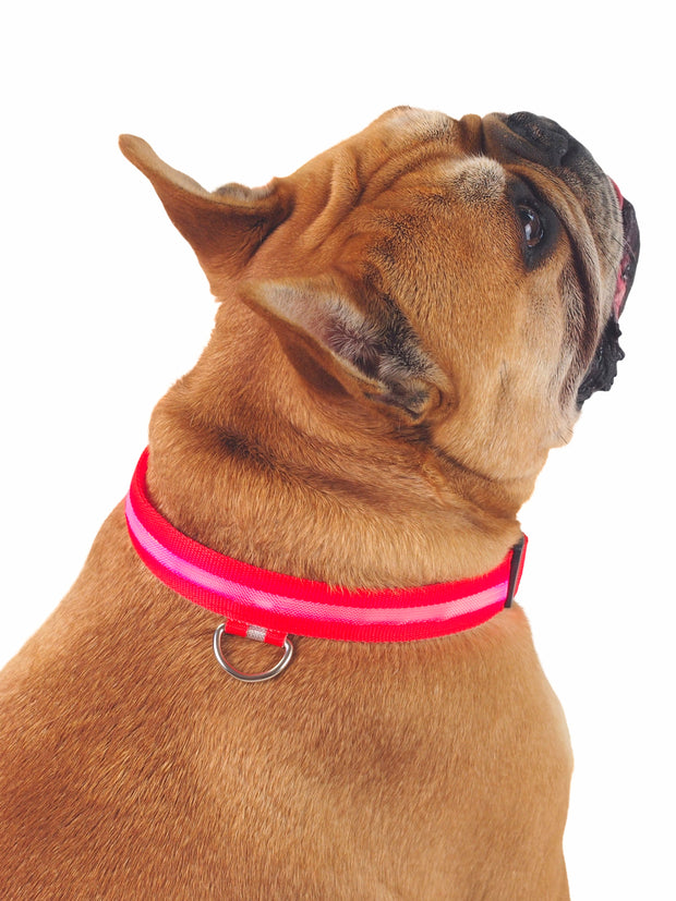 Glow! LED Dog Collar in red