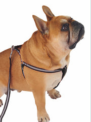 Adjustable reflective nylon dog harness and lead