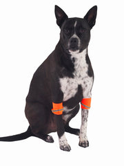 Affordable online dog apparel and night safety leg bands