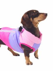 Trendy online dog jackets, coats and apparel
