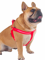 Glow! LED Dog Harness in red