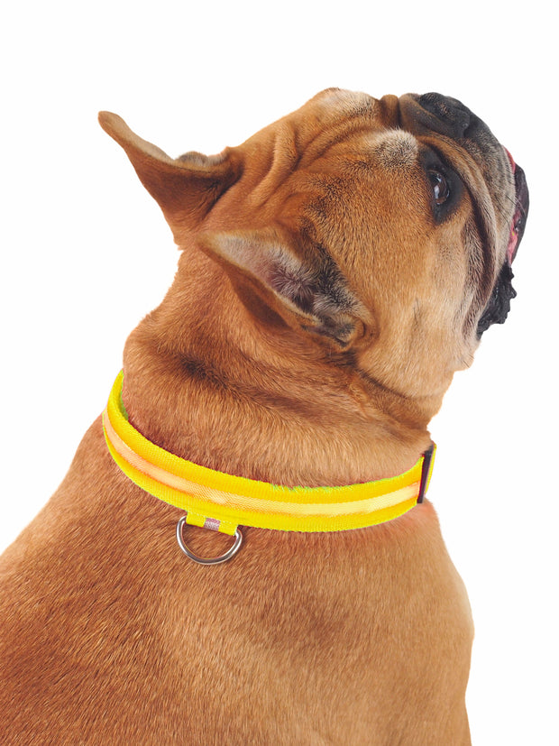 Cheap LED dog collar