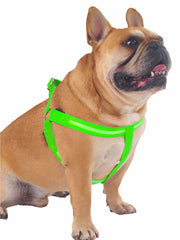 Battery powered LED night time dog harness