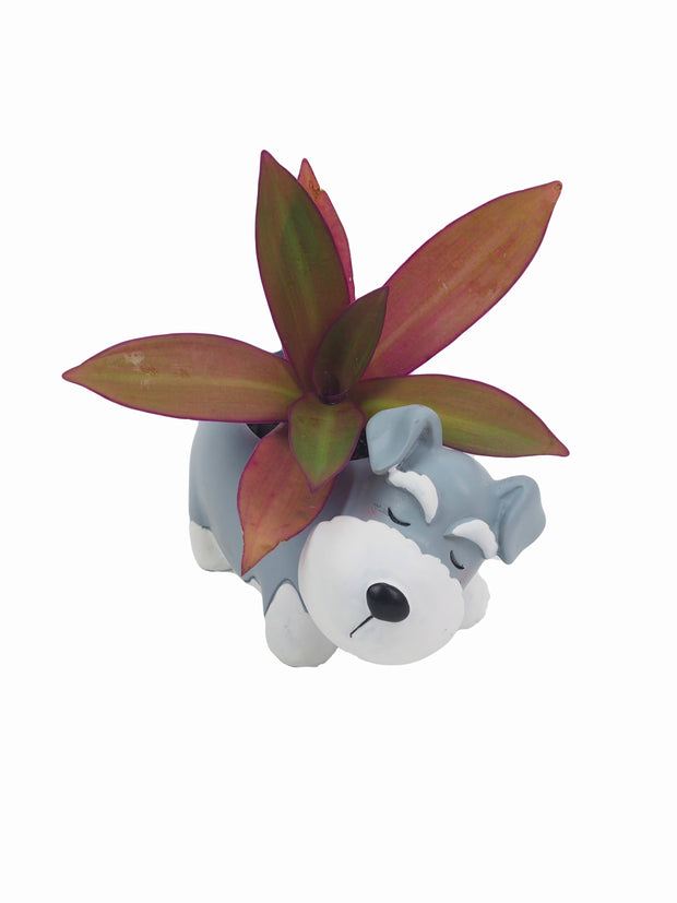 Affordable online dog lovers gifts schnauzer succulent pot