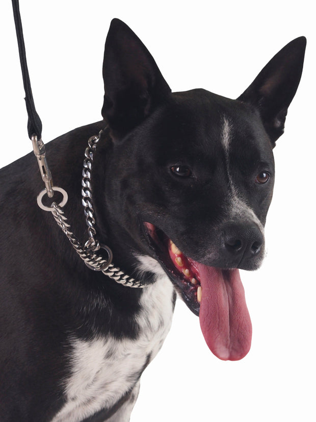 Stainless steel choker chain for dogs