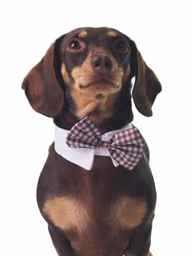 Adjustable dog tuxedo bow tie with collar in blue plaid