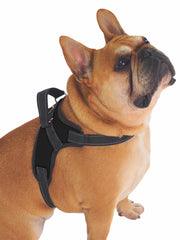 Trending online adjustable dog harness