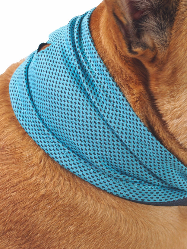 Blue polyester bandana to keep dogs cool in summer