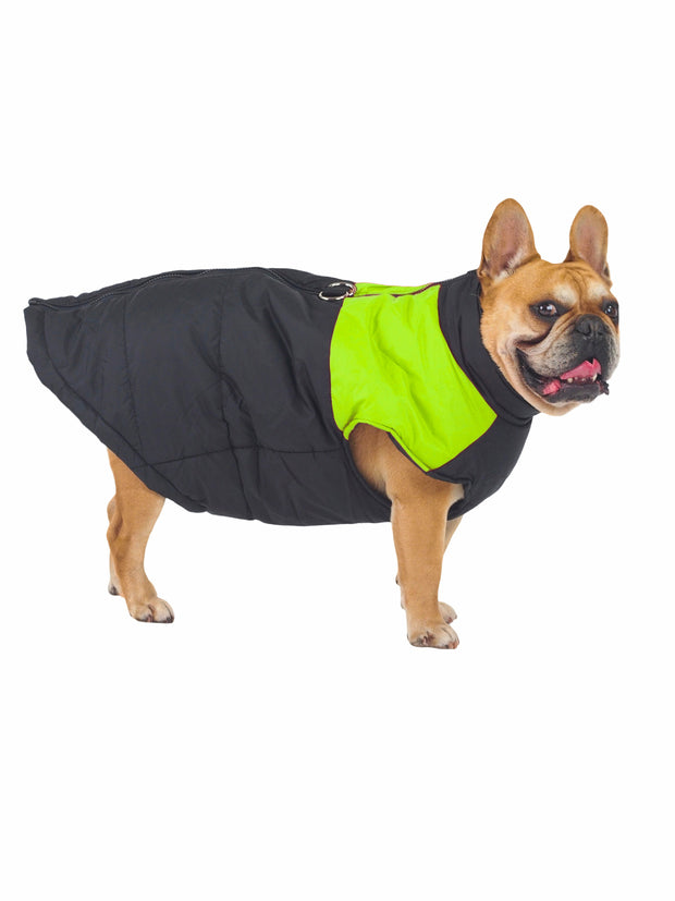Fashionable padded puffer jacket for dogs