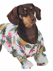 Fancy apparel for dogs