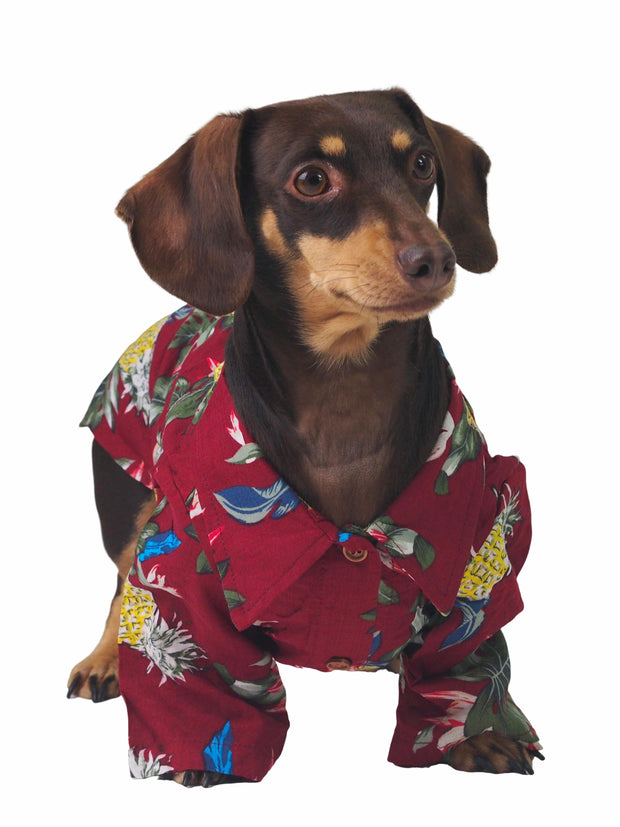 Spring and summer dog fashion hawaiian shirt
