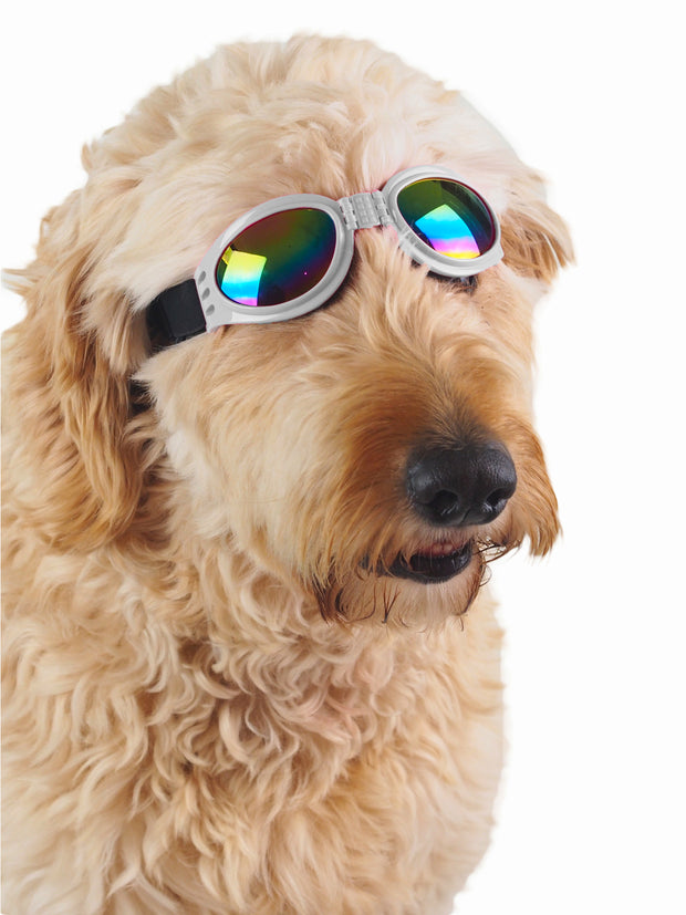Cute protective dog goggles