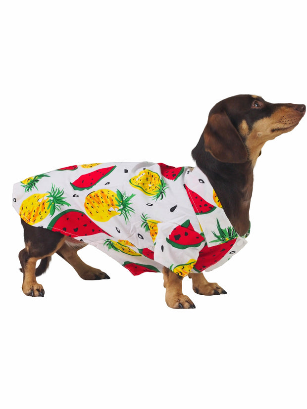 Fancy spring and summer dog apparel and shirts