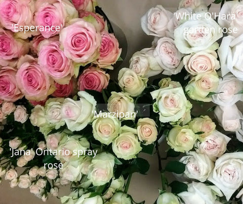 pink, blush and ivory roses at Sage Flowers in Kingston ON. Varieties shown are esperance, white o'hara, jana and marzipan.