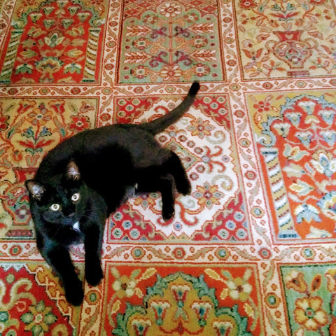 a black cat on a patterned rug