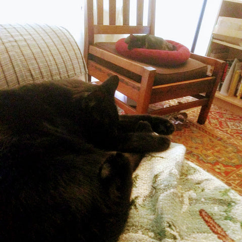 two black cats having a nap in the living room