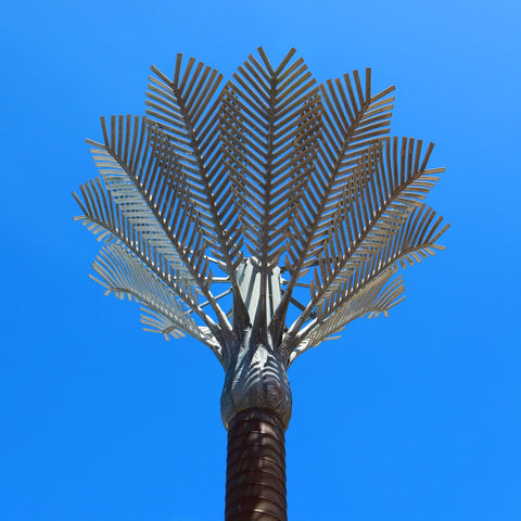 Civic Square Palm Tree