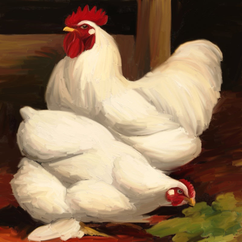 AD-072 White Rooster
