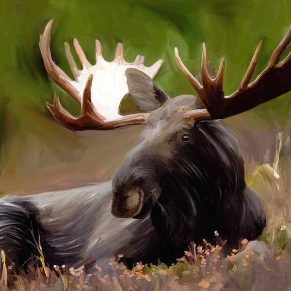AD-723 Magnificent Moose