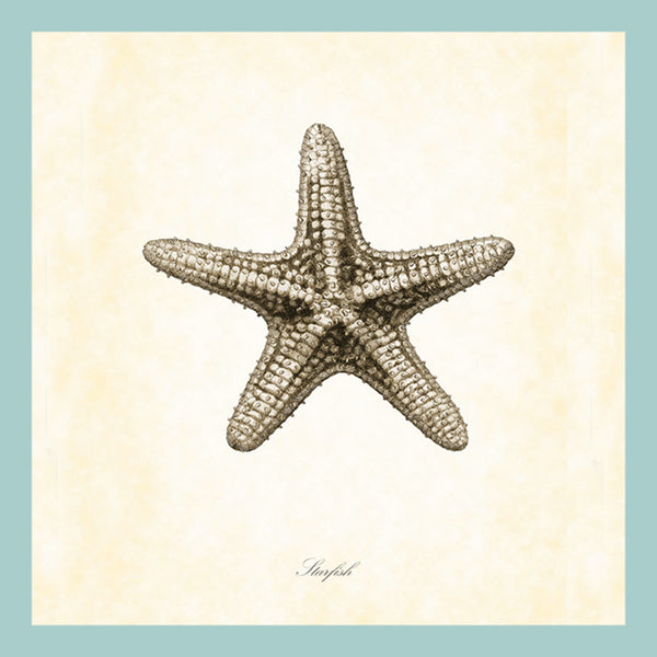 BE-066  Gray Starfish