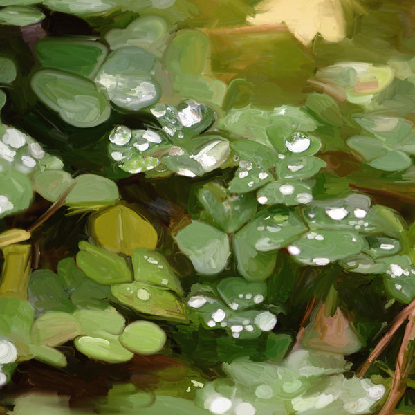 Clovers in the Spring Rain