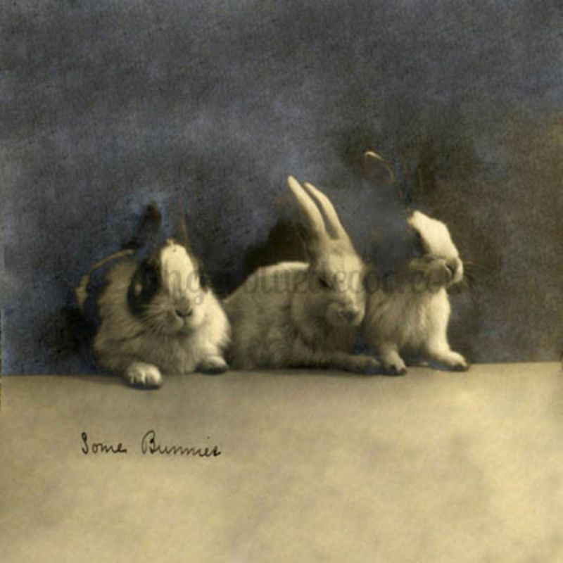 EH-108 Some Bunnies