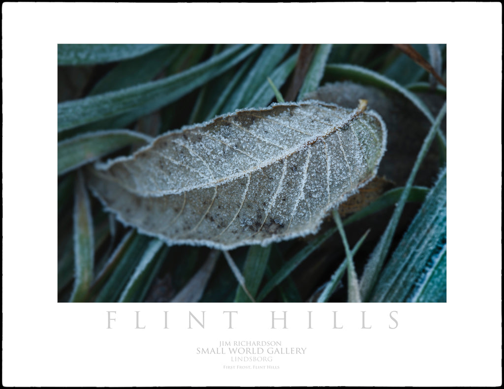 First Frost Leaf - Flint Hills of KS