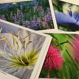 Box of 8 Flint Hills in Bloom Cards
