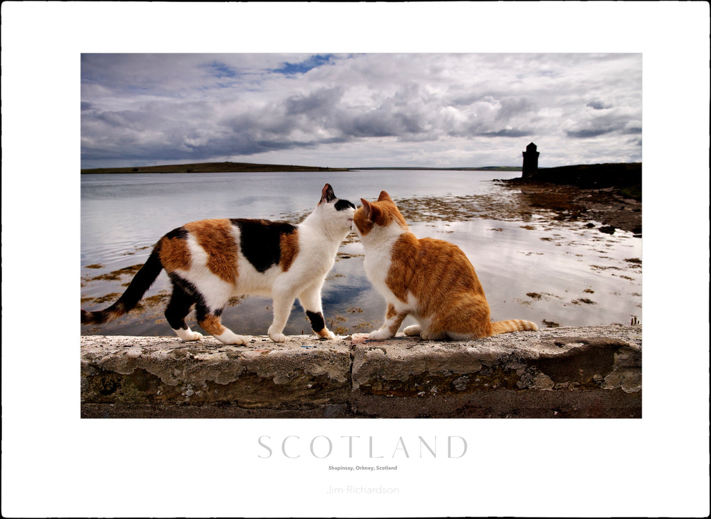 Harbor Cats - Scotland