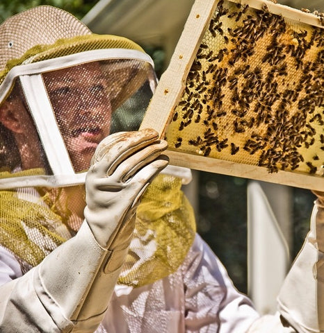 Oregon Master Bee Keeper Program - bambu scholarship