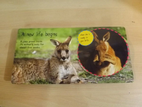 Joey to Kangaroo Childrens Lift Flap Board Book Large  *