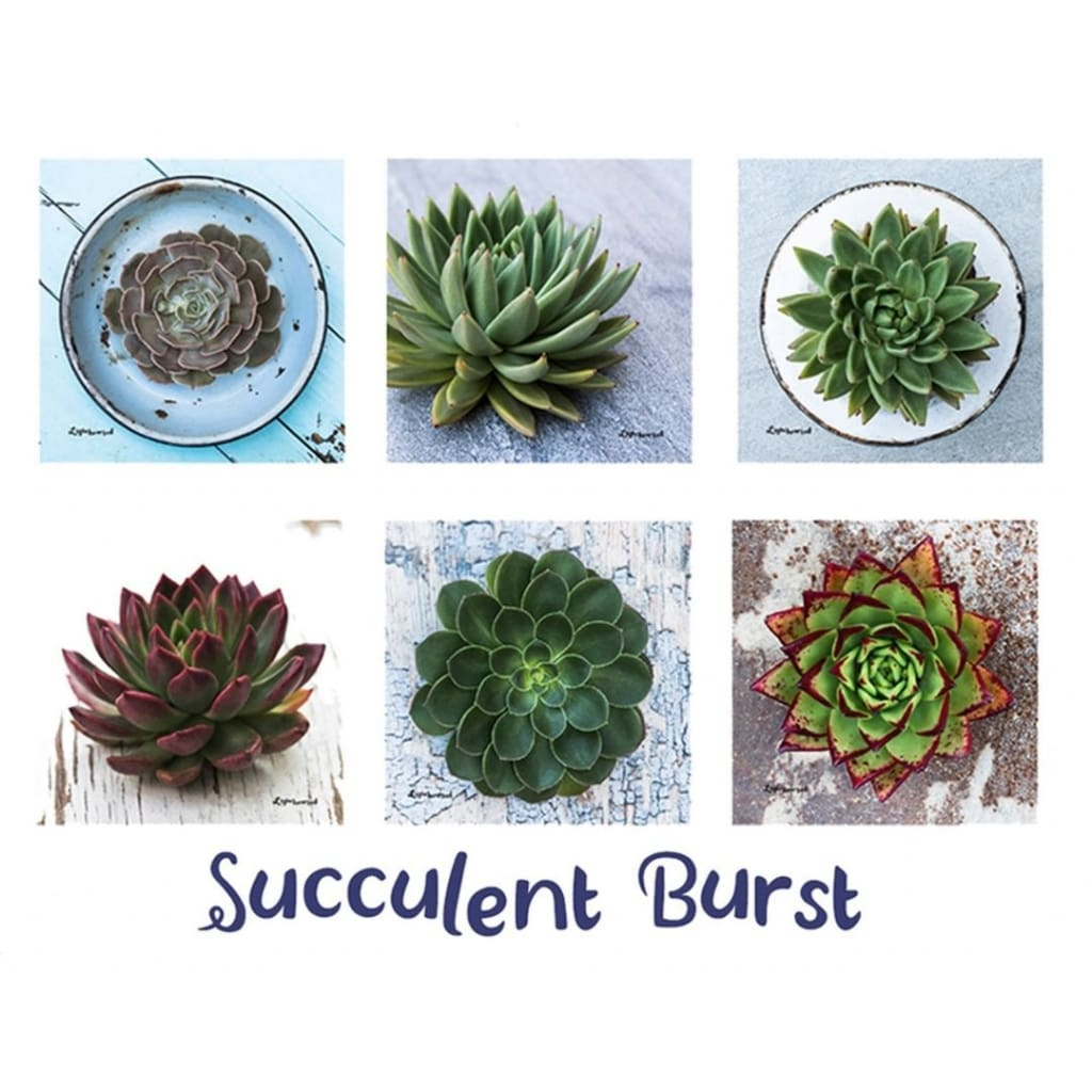 Lighthearted Coaster Set - Succulent Burst - Gifting Ideas