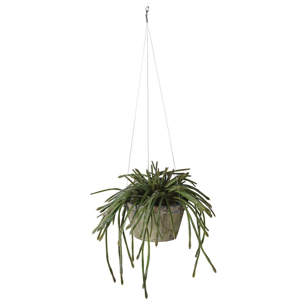 Aripost Hanging Plant in a Pot