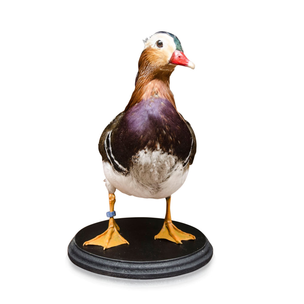 Ming Duck Bird Ornament