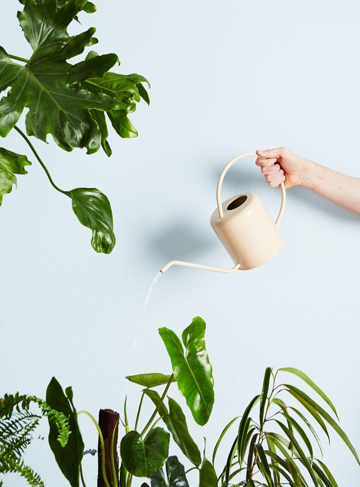 Flora Watering Can Styled | Interior Jungle