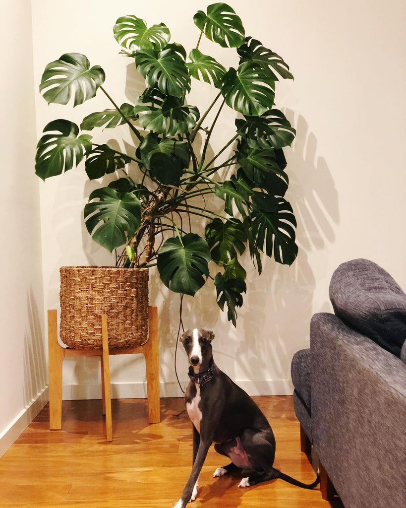 Know your plants | Interior Jungle
